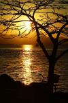 author: Jos� Fernando Ogura, Brasil title: Golden Sunset...