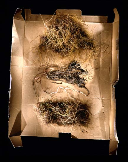 auteur: Jeremy Webb titre: grass clumps (3) on cardboard