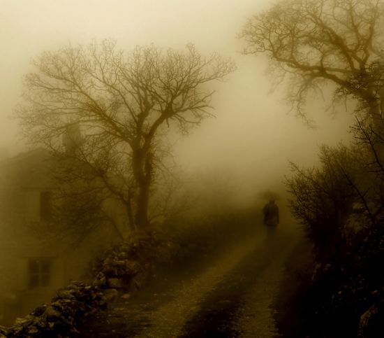 auteur: paulo rodrigues titre: misty morning